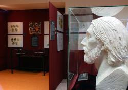 Szent László király arcrekonstrukciója